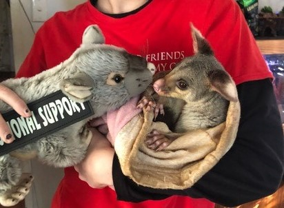 Substitute Emotional Support Animal – Anxiety Support