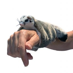 Bocchetta Squirrel Glider Snapband Slap Bracelet Stuffed Animal Soft Plush Toy, 21 cm Length