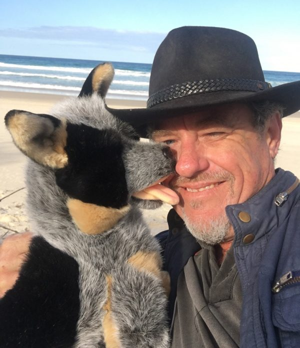 Rocky plush cattle dog as emotional support animal